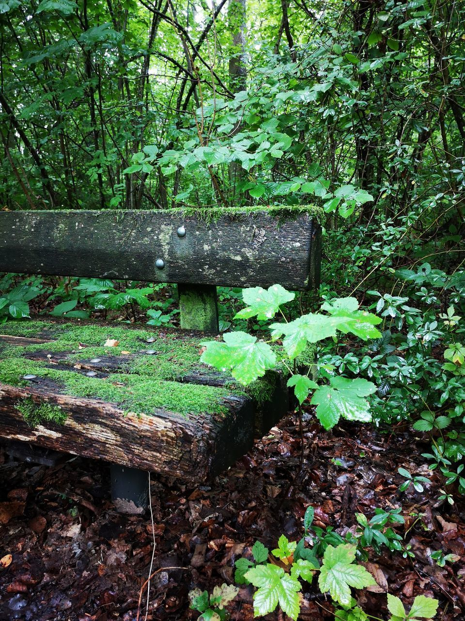 VIEW OF BENCH IN FOREST