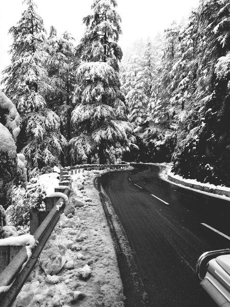 Black & White Snow