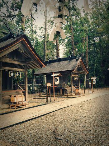 出雲大社(Izumo taisha) Izumo Taisha Shrine Architecture History Tree No People Izumo Japan Travel Photography