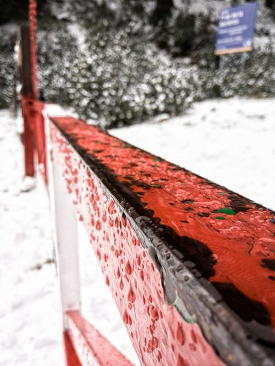Winter mood Red Snow Winter Outdoors Day Cold Temperature No People Tree Nature Close-up