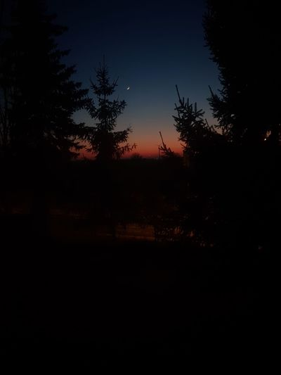 Red Sky Night Moon Tree Darkness First Eyeem Photo