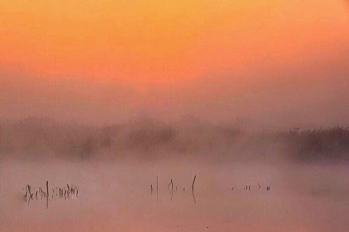 Nature Pond Landscapes EyeEm Water Shots Water_collection EyeEm Nature Lover EyeEm Best Shots - Nature Landscape Fog Mist Misty Morning Morning Glow ISOPIX Dedicate To @intreccio