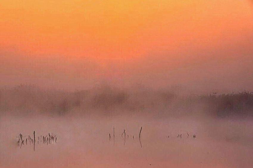 Nature Pond Landscapes EyeEm Water Shots Water_collection EyeEm Nature Lover EyeEm Best Shots - Nature Landscape Fog Mist Misty Morning Morning Glow ISOPIX Dedicate To @intreccio