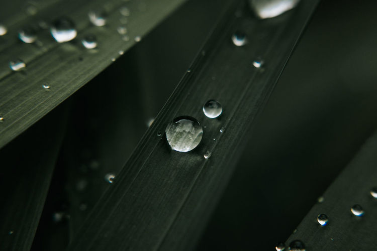 Close-up of water drops on wood