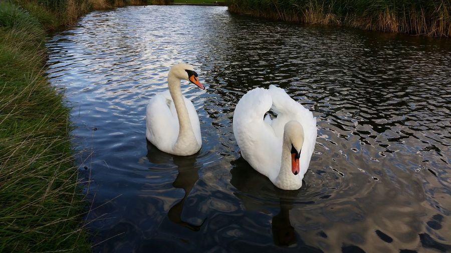 """""""Mates for Life"""" ...on the Canal. Worcestershire Countryside.......... (Bike-ride 2 continued) 10/10/14 The Purist (no Edit, No Filter) Keep The Fire In Your Heart Water Reflections Malephotographerofthemonth"""