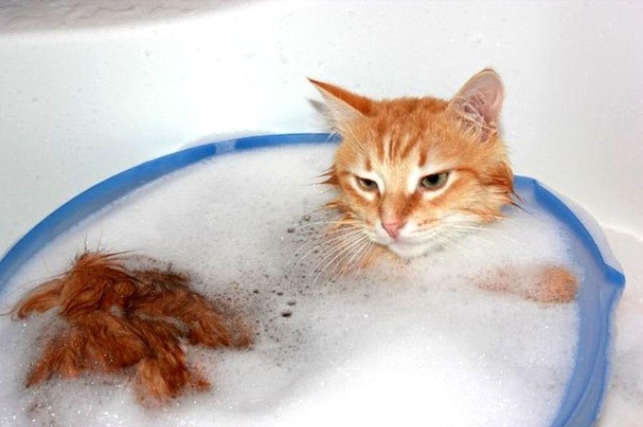 Cat Áfonya Afonsiko рыжий кот Афоня Cats Cat♡