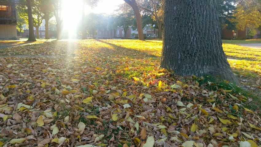 Fall color HTConeA9 First Eyeem Photo Fall Fall Season