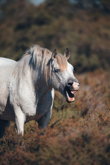 Side view of a horse on field