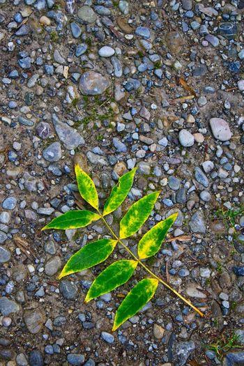 Leaf on the