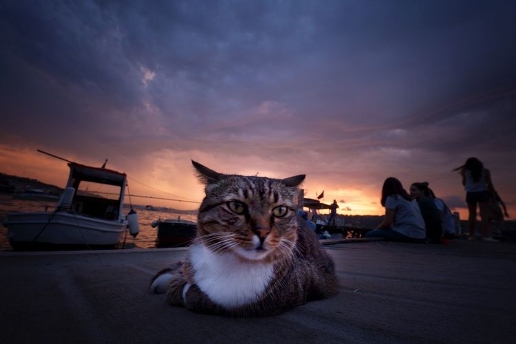 Portrait Of Cat Sitting Against Sky During Sunset