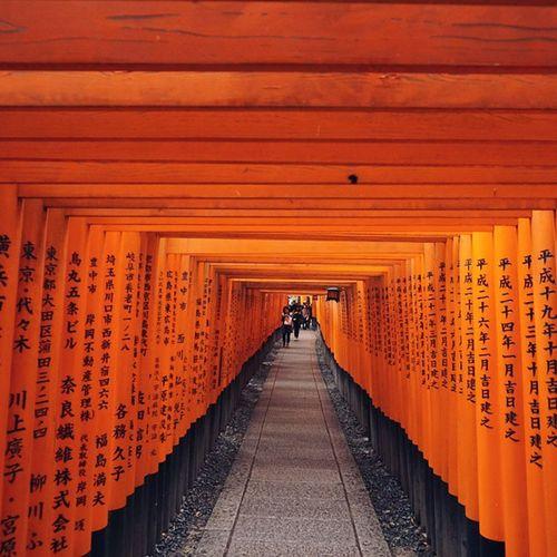 ヾ(*ΦωΦ)ノ夜にまた来たい♥♥ Vscocam 千本鳥居 Japan Kyoto 伏見稲荷大社 Travelgram Thetimeswehad