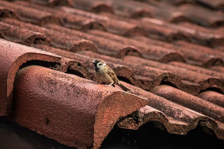 little bird on