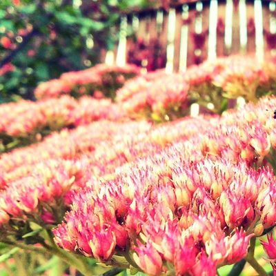 Vscobest Vscolovers Vscocam Vscostyle vscogood vsco nature autumn flowers creative colors today morning instagram инстаграмнедели photo