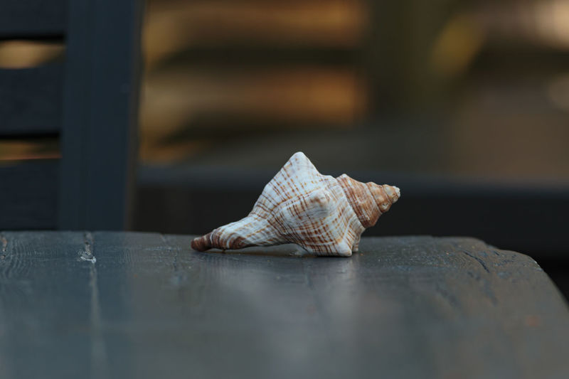Small striped seashell on a wooden table