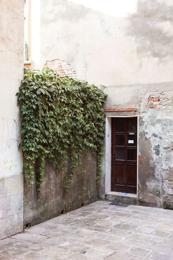 Architecture Building Building Exterior Built Structure City Day Door Doorway Entrance Growth House Nature No People Outdoors Plant Residential District Tree Venice Wall Wall - Building Feature Window