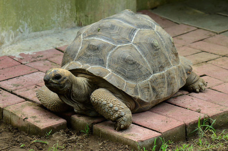 an old tortoise