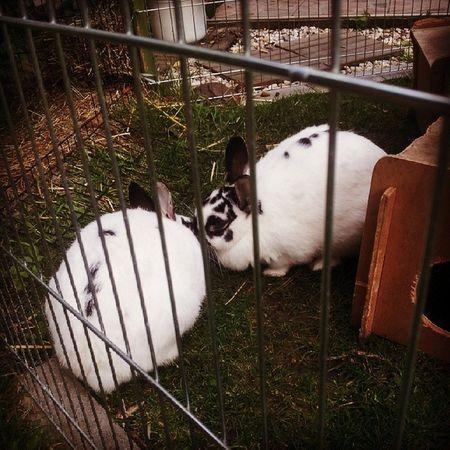Instakiss Bunnys