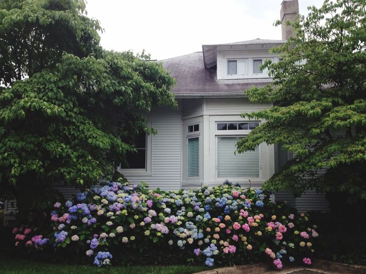 Spring Flowers Hydrangea Bay Window