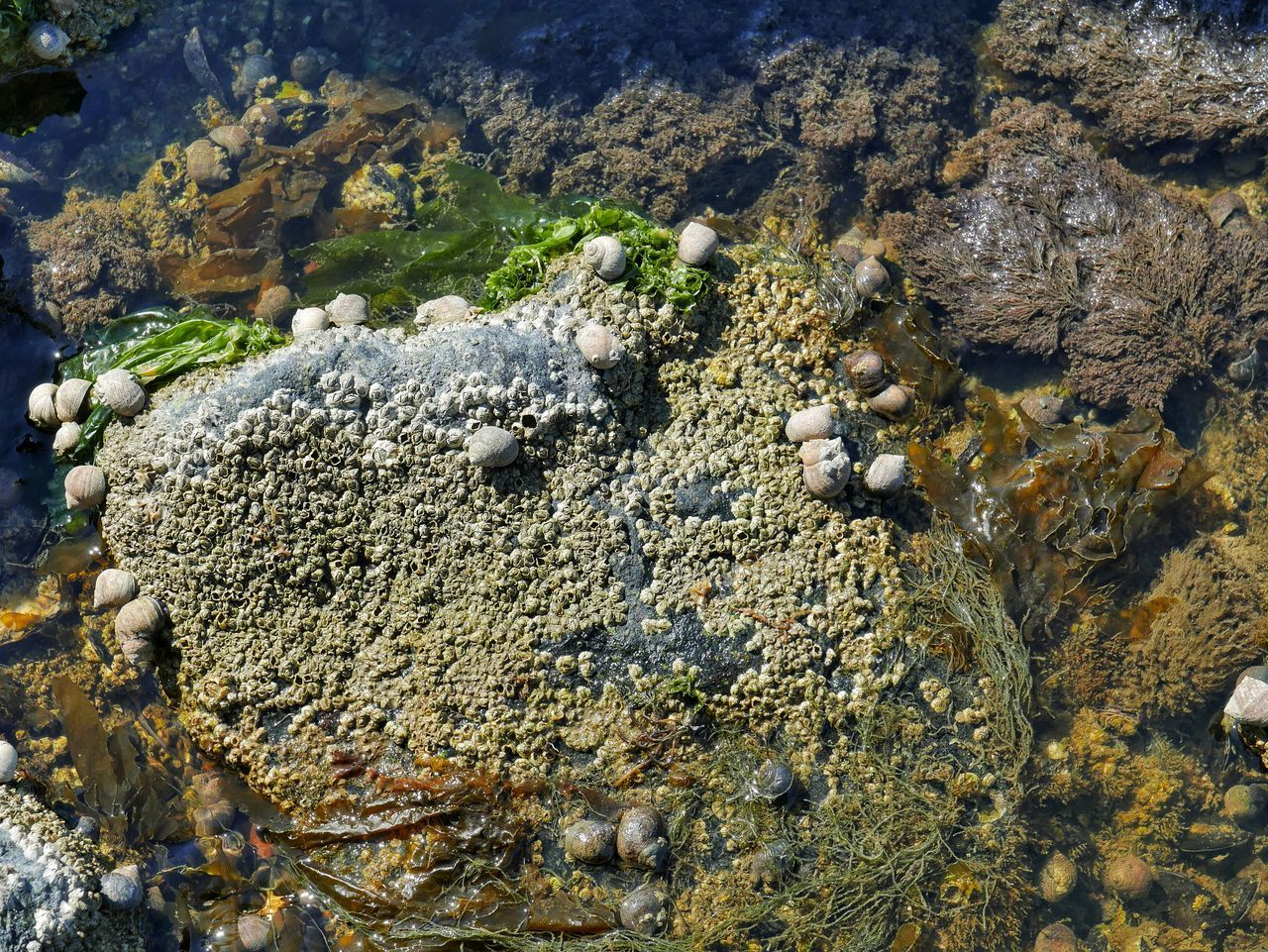 rock, solid, nature, no people, rock - object, day, beauty in nature, land, water, high angle view, textured, outdoors, moss, sea, growth, animals in the wild, sea life, rough, plant, animal wildlife, marine, pebble, lichen