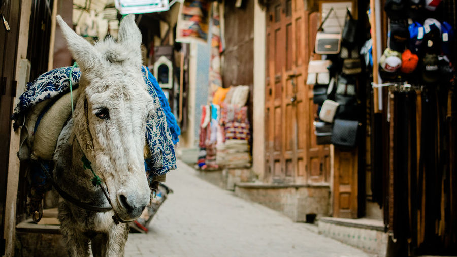 Close-up of donkey standing on street amidst houses in city