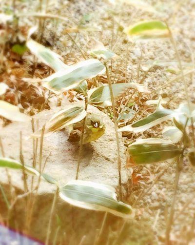 Bird Small Garden Nature
