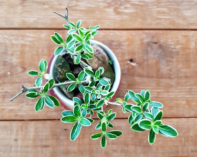 Directly above shot of potted plant on table