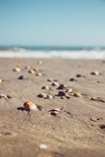 Close-up of shells on sand at beach against sky