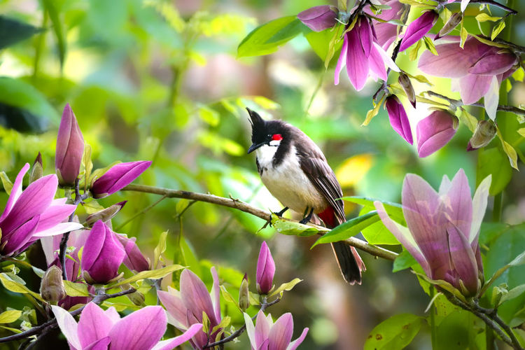 Close-up of hummingbird perching on pink flowering plant