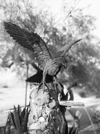 One Animal Day Nature Animals In The Wild Outdoors Animal Themes No People Close-up Sky Taking Photos Looking At Camera Enjoying The View Google Pixel XL EyeEm Selects Arizona Desert Full Frame Outdoor Photography Architecture Black And White Black And White Photography Statue Bird Petrified Google Pixel