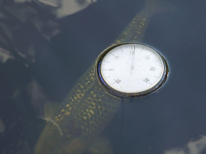 High angle view of abandoned clock floating over fish swimming in lake