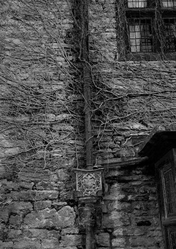 Really like this one... Favourite Favouritepicture No People Outdoors Building Exterior Vine Vines Ludlow BlackandwhiteNetwork Branching Out Building Wall Stone Nature Maze Puzzle