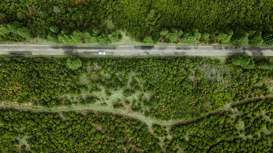 Top view of road through the green autumn forest. Drone  DJI Mavic Pro DJI X Eyeem Car Forest High Angle View Top View Top Perspective Directly Above Beauty In Nature Road Aerial View Madeira Island Nature Tranquility Rural Scene Tropical Climate Environment Backgrounds Day Travel Destinations Outdoors Adventure