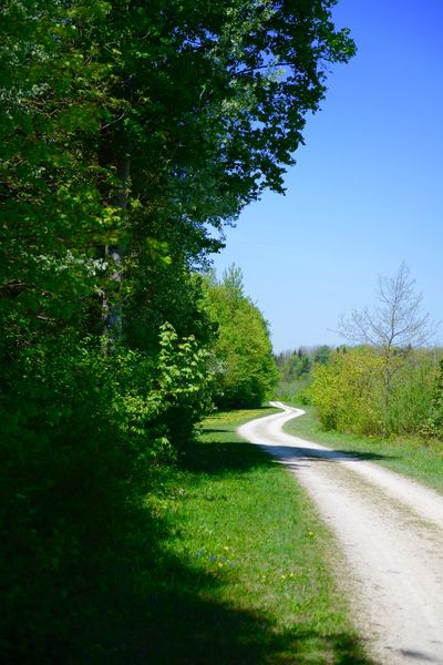 Weg entlang der Iller Leisure Activity Hiking Path Forward Path Of Life Plant Tree Green Color Sky Nature Grass Growth Day No People Tranquility Sunlight Beauty In Nature Land Outdoors Blue Clear Sky Footpath