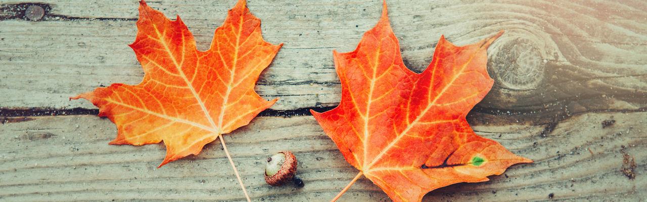 Close-up of autumn leaf on wood