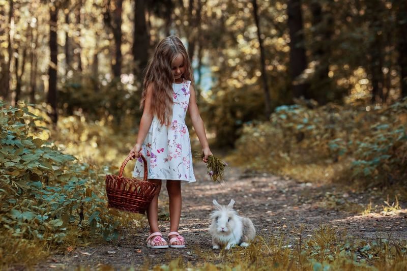 Cute Girl With Basket Standing By Rabbit On Field In Forest