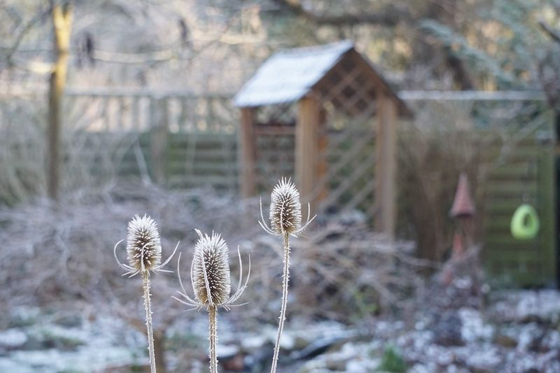Focus On Foreground Plant Snow Winter Cold Temperature Nature No People