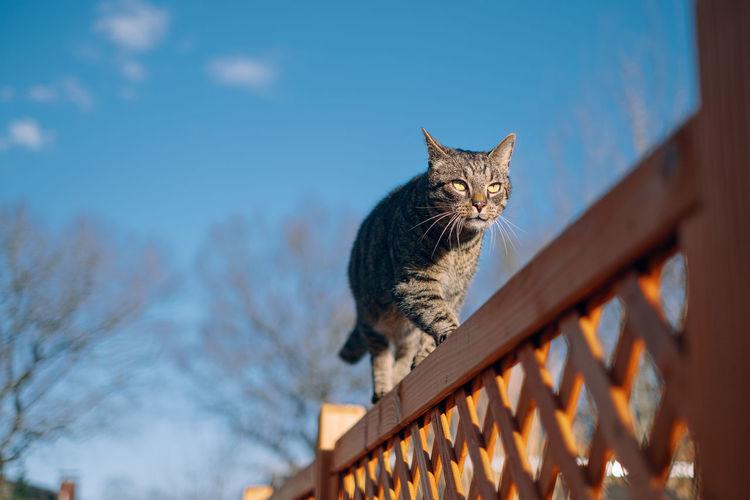 Low angle view of cat sitting on railing