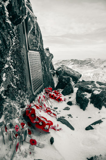 "Poppies frozen to the summit of Great Gable, laid to honour those who gave their lives during the great war. The memorial plaque reads: ""Fell and Rock Climbing Club. In glorious and happy memory of those whose names are inscribed below - members of the club - who died for their country in the European War 1914 - 1918. These fells were acquired by their fellow-members and by them vested in the National Trust for the use and enjoyment of the people of our land for all time"" In memory of the following people: J. S. BAINBRIDGE, J. G. BEAN, H. S. P. BLAIR, A. J. CLAY, J. N. FLETCHER, W. H. B. GROSS, E. HARTLEY, S. W. HERFORD, S. F. JEFFCOAT, E. B. LEES, S. J. LINZELL, L. J. OPPENHEIMER, A. J. PRICHARD, A. M. RIMER, R. B. SANDERSON, H. L. SLINGSBY, G. C. TURNER, B. H. WITTY, J. H. WHITWORTH, C. S. WORTHINGTON. Red No People Winter Nature Day Beauty In Nature Cold Temperature Snow Mountain Remembrance Remembrance Day Poppy Poppies  Armistice Armistice Day Cumbria Uk England Great Gable In Memory Summit Trig Point Honouring The Dead Honour Rock And Fell Climbing Club"