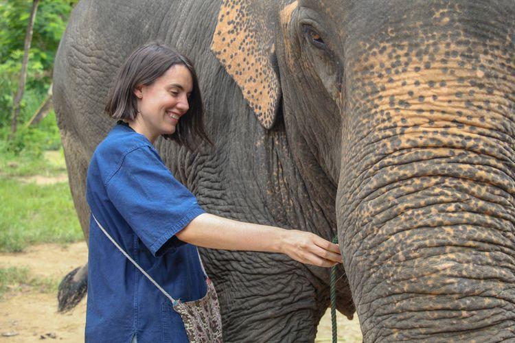 Elephant Indian Elephant Women Adult One Animal Asian Elephant Animal Wildlife