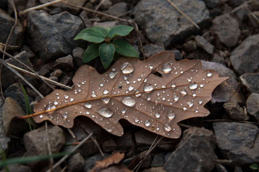 Autumn Beauty In Nature Botany Change Close-up Day Dew Drop Droplet Fallen Leaf Fragility Freshness Growth Leaf Leaf Vein Leaves Natural Condition Nature Outdoors Plant Selective Focus Water Water Drop Wet