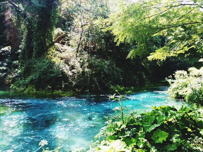 Water Nature Beauty In Nature Forest Scenics River Tree Tranquility Outdoors Day Tranquil Scene Growth No People Green Color Waterfall Plant Syrikalter Blueeye Saranda  Albania Sommergefühle Sommergefühle