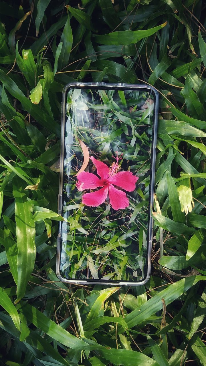 HIGH ANGLE VIEW OF PINK FLOWERING PLANTS ON LEAF