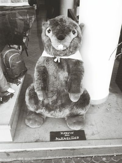 Marvin das Murmeltier