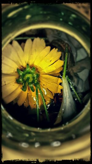 Bouquet In A Bottle Yellow Flower Upside Down Adrift EyeEm Nature Lover EyeEm Best Edits