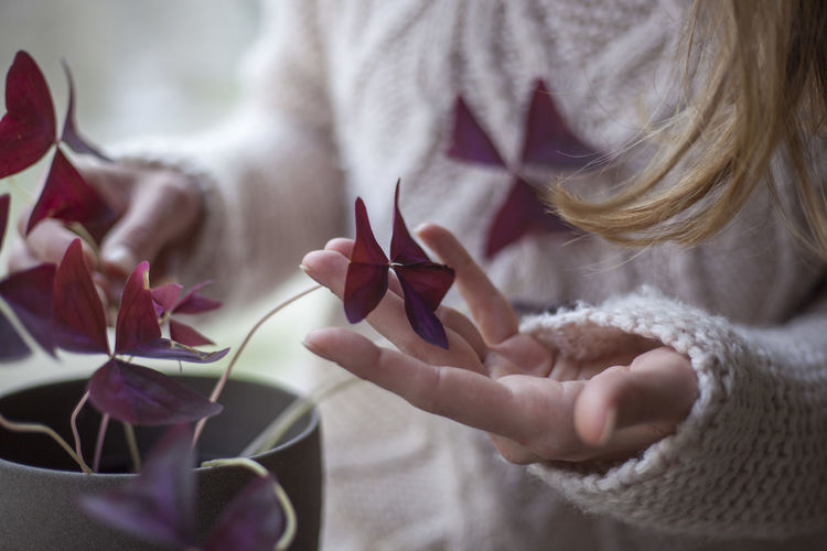 Purple Purple Flower Flower Copy Space Little Decoration Pink Detail EyeEm Selects Noface Hands Human Hand Winter Women Close-up Blooming Flower Head