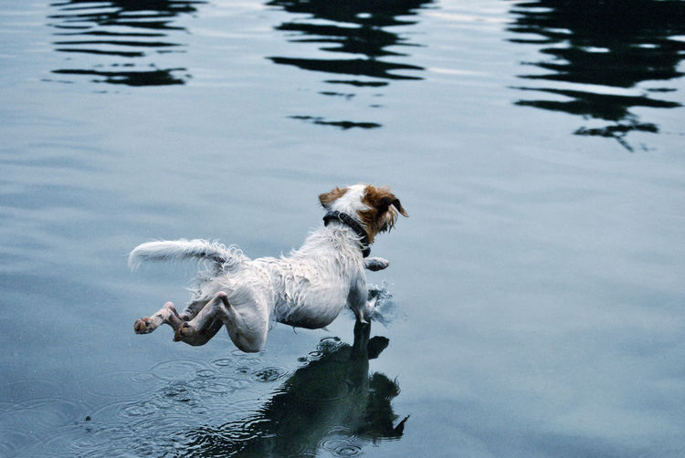 Animal Themes Day Dog Domestic Animals High Angle View Jesus Christ Lake Mammal Nature No People One Animal Outdoors Pets Reflection Swimming Swimming Pool Water Waterfront Wet My Best Photo