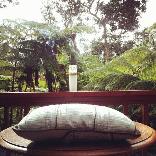 Morning meditation in the Hawaiian forest.