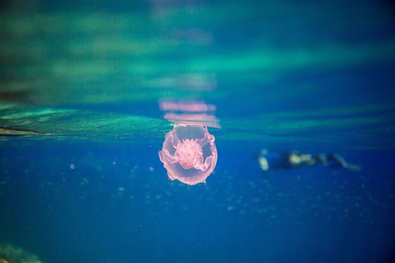 Close-up of flower floating on water