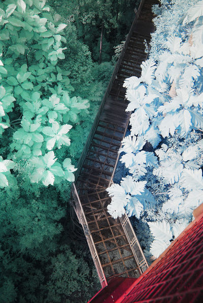 A high angle infrared view of hanging metal bridge surrounded by blue and green foliage tall trees. Hanging Infrared Beauty In Nature Color Infrared Colorful Foliage Day Division Growth High Angle View Infrared Photography Leaf Metal Bridge Nature No People Outdoors Plant Tree