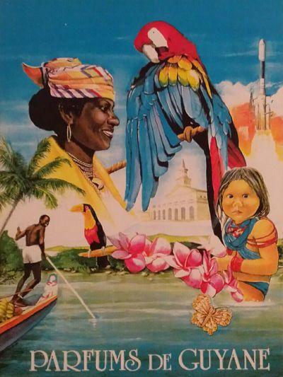 I Miss Franz. Guyana Southamerica Tropical Paradise Palms Meet Nice Peoples I Love Parrots Beautiful Nature Warmweather My Parfume